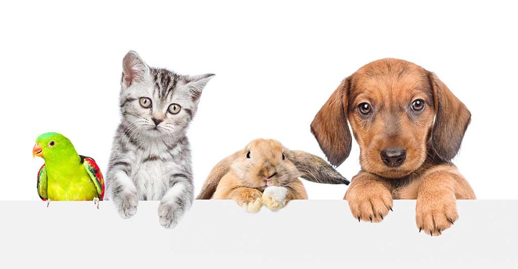 chat, lapin, perruche, chien, contrat de mariage, PetNup