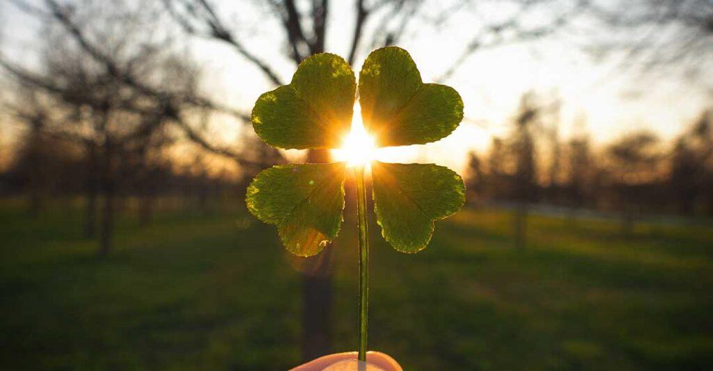 trèfle à quatre feuilles,soleil, nature, calme, décès, planification successorale.